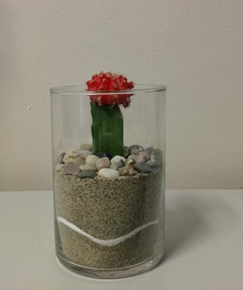 Cactus dans pot de verre circulaire
