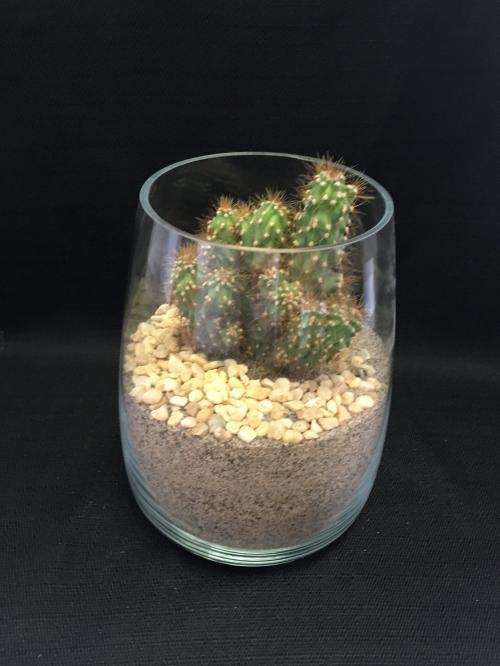 Cactus dans gros pot en verre