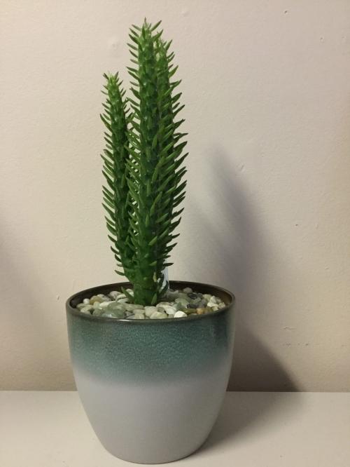 Cactus dans pot de grès